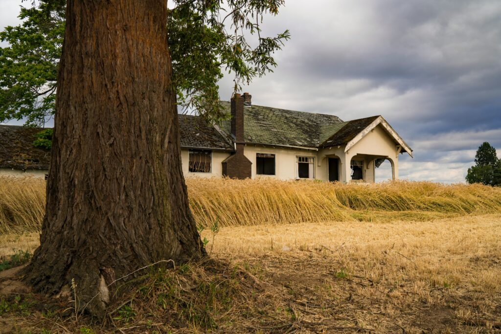 A home by a big tree in a field of wheat during the COVID eviction moratorium period.